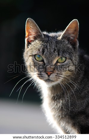 Beautiful portrait of a cat sitting on the front , vertical - stock photo
