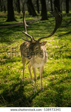 Beautiful portrait of a deer roaming free in the park