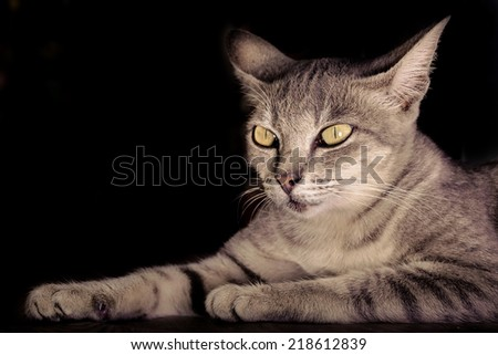 beautiful portrait of a grey cat on a black background - stock photo