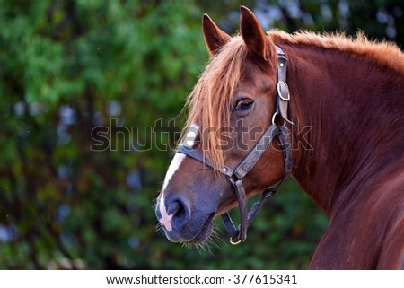 Beautiful portrait of a horse