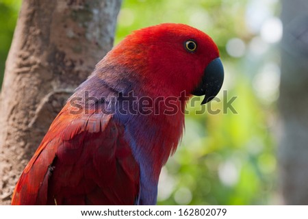 Beautiful portrait of red parrot on the background of forest