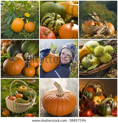 Beautiful pumpkin collage made from nine photographs - stock photo