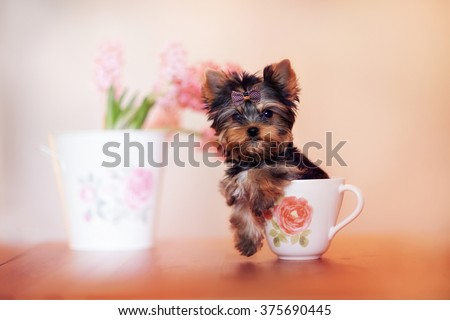 beautiful puppy York sitting in the cup. Next to the dog a bowl of flowers. Funny dog and flowers.