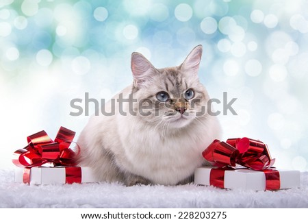 Beautiful purebred cat with Christmas gifts. New year. Christmas animals - stock photo