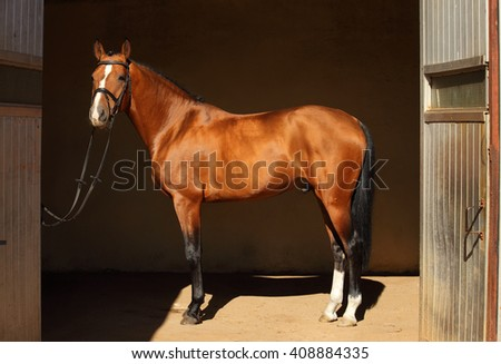 Beautiful purebred dressage horse in his dark stable - stock photo