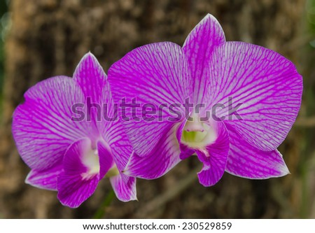 Beautiful purple and white orchids on bark blurred into a scene.
