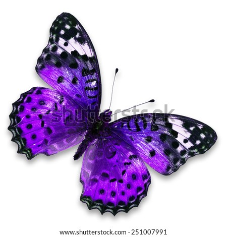 Beautiful purple butterfly isolated on white background - stock photo