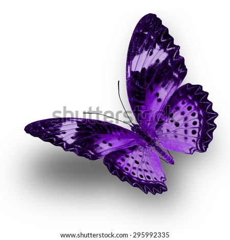 Beautiful Purple butterfly upper wing profile flying up - stock photo
