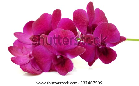 beautiful Purple Dendrobium orchids flowers isolated on white - stock photo