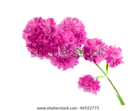 Beautiful purple flower isolated on white