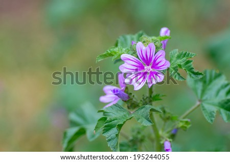 Beautiful purple flower. Natural composition - stock photo
