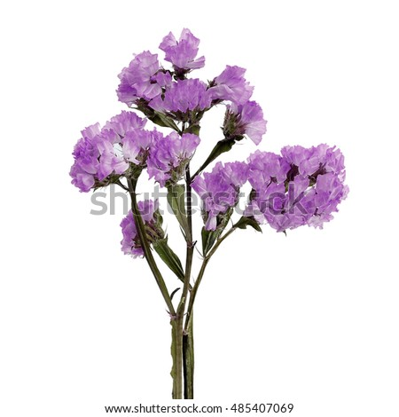 Beautiful purple flower on a white background