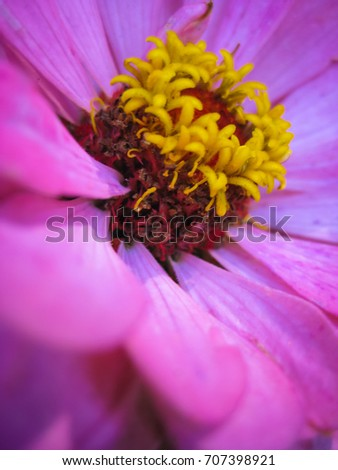 Beautiful purple flower yellow stamens macro stock photo royalty beautiful purple flower with yellow stamens macro mightylinksfo