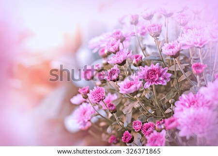 Beautiful purple flowers - stock photo