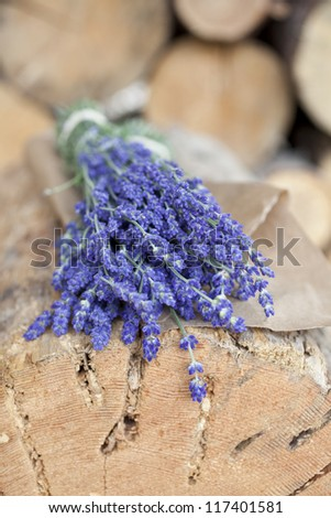 Beautiful purple flowers of lavender - stock photo