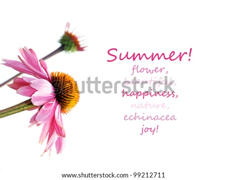 Beautiful purple flowers or echinacea on white with positive, fun, inspiring words, perfect floral background. - stock photo