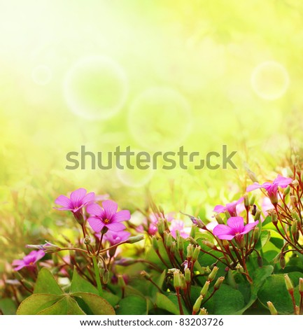 Beautiful purple flowers with a spring time bokeh and sun-flares - stock photo