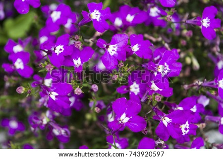 Beautiful purple flowers white color middle stock photo edit now beautiful purple flowers with white color in middle of close up mightylinksfo