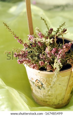 Beautiful purple heather in a vintage wooden pot
