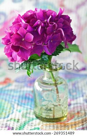 beautiful purple hydrangea flowers in a vase on a table . - stock photo