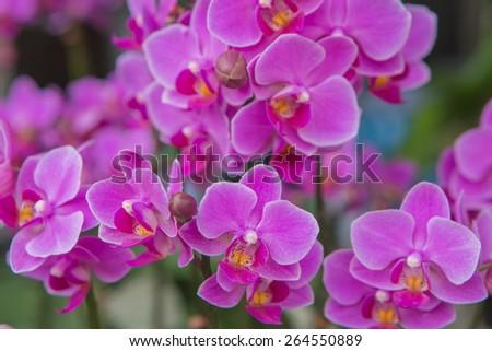Beautiful purple orchid - stock photo
