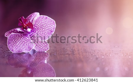 Beautiful purple orchid flower background with copy space - stock photo
