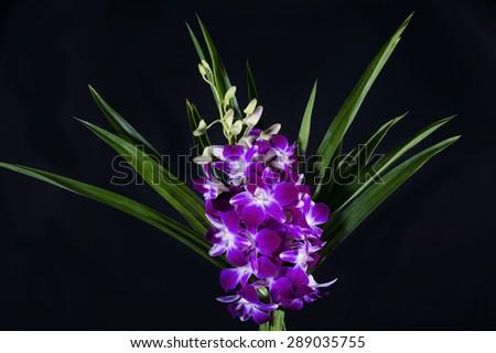 Beautiful purple orchid isolated on black - stock photo
