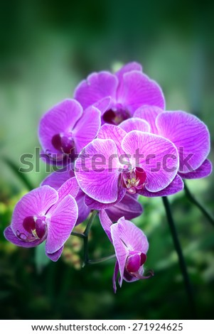 Beautiful purple orchid - phalaenopsis on dark green background - stock photo