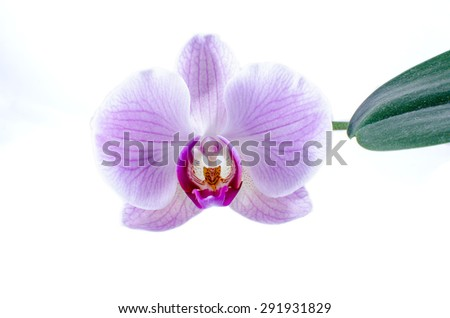 Beautiful purple orchids isolated on white. - stock photo