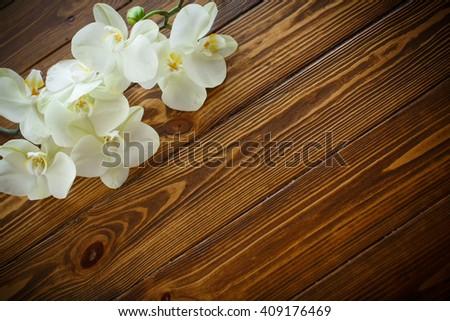 Beautiful purple phalaenopsis flowers - stock photo