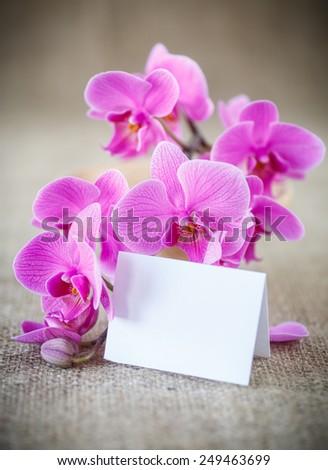 Beautiful purple phalaenopsis flowers on the table - stock photo