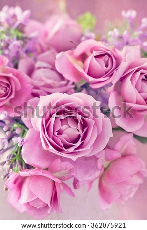 beautiful purple rose flower close-up. - stock photo