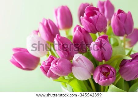 beautiful purple tulip flowers background - stock photo