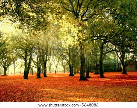 Beautiful quiet park in bright autumnal colors, with bright colored leaves covering the ground. - stock photo
