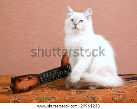 Beautiful Ragdoll kitten with miniature guitar on brown background - stock photo