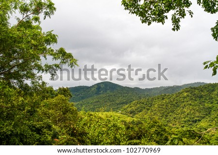 Beautiful rain forest - stock photo