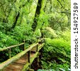 Beautiful rain forest at ang ka nature trail in doi inthanon national park, Thailand - stock