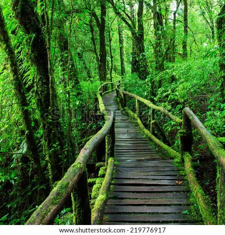 Beautiful rain forest ang ka nature stock photo royalty - Nature ka wallpaper ...