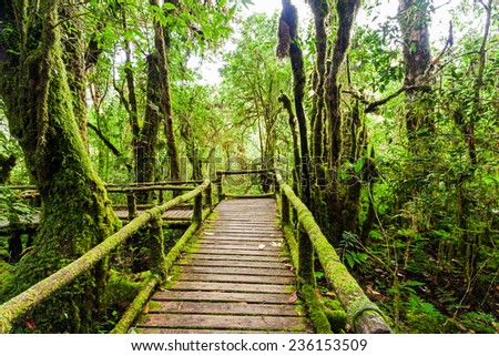 Beautiful rain forest at angka nature trail in doiinthanon national park, Thailand  - stock photo