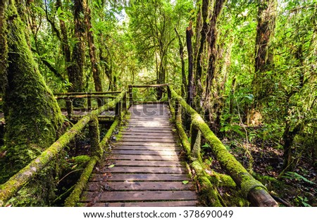 Beautiful rain forest at angka nature trail in doiinthanon national park, Thailand
