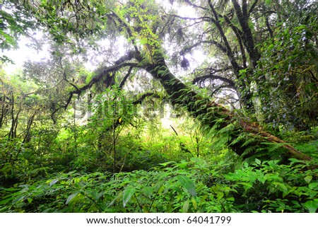 Beautiful rain forest at doi inthanon national park, Thailand - stock photo