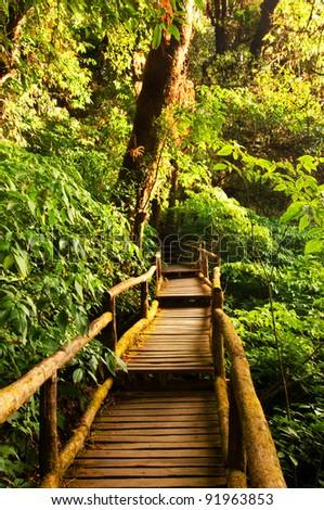 Beautiful rain forest at doi inthanon national park, Thailand - stock photo
