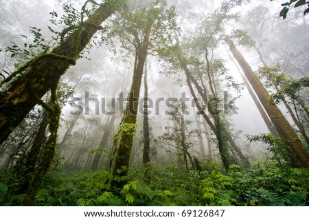 Beautiful Rain Forest (Doi Inthanon National Park), Thailand - stock photo