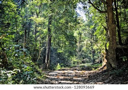 Beautiful Rain Forest (Doi suthep), chiang mai, Thailand - stock photo