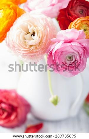 beautiful ranunculus flowers in vase  - stock photo