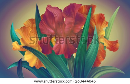 Beautiful Red and Orange Irises banner for fashion design. Unique style of abstract flowers. Can be used for posters, birthday card, banners and other.  - stock photo