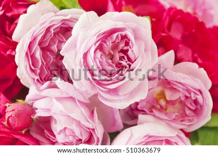Beautiful red and pink rose flowers bunch background