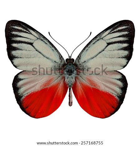 Beautiful Red butterfly upper wing profile isolated on white background - stock photo