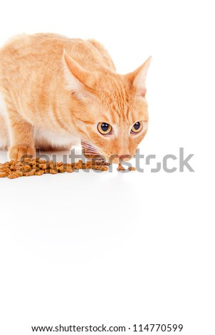 beautiful red cat eats feed isolated on white background - stock photo