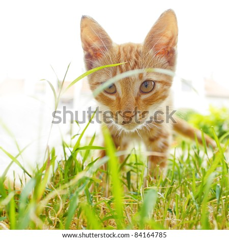 Beautiful Red Cat in Grass - stock photo